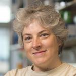 Prof Judy Hirst, Director of MRC Mitochondrial Biology Unit